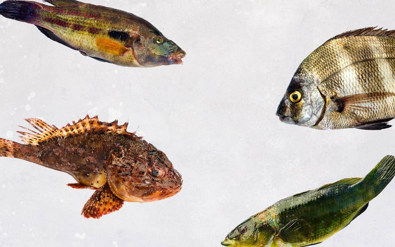 poissons restaurant gastronomique paca