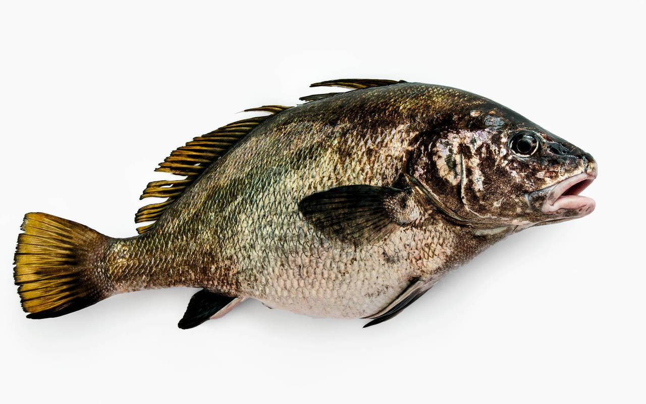 poisson restaurant gastronomique bouches du rhone